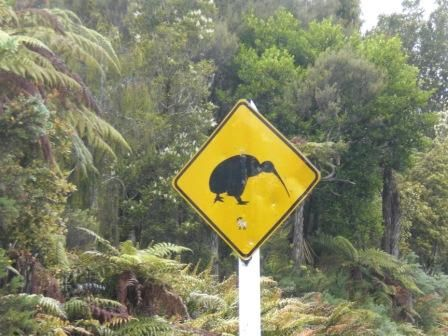 Okarito: Achtung Kiwi Vögel - Attention Kiwi Birds