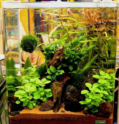 nano cube aquarium von dennerle akvariumas aquarium garnelen aquarium aquarium einrichten. Black Bedroom Furniture Sets. Home Design Ideas