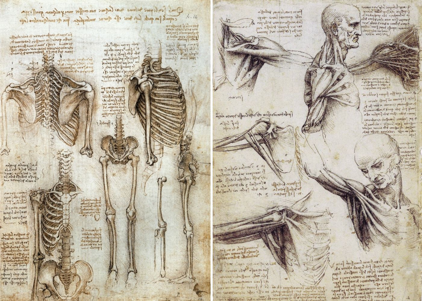"""Human anatomy, by Leonardo Da Vinci (1509-1510) """"At a time in history when  few people had methodical… 