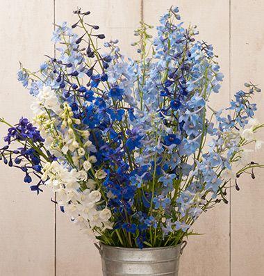 Pin On Garden Flowers