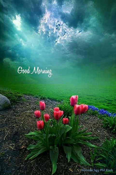 Good Morning Images With Nature Beauty