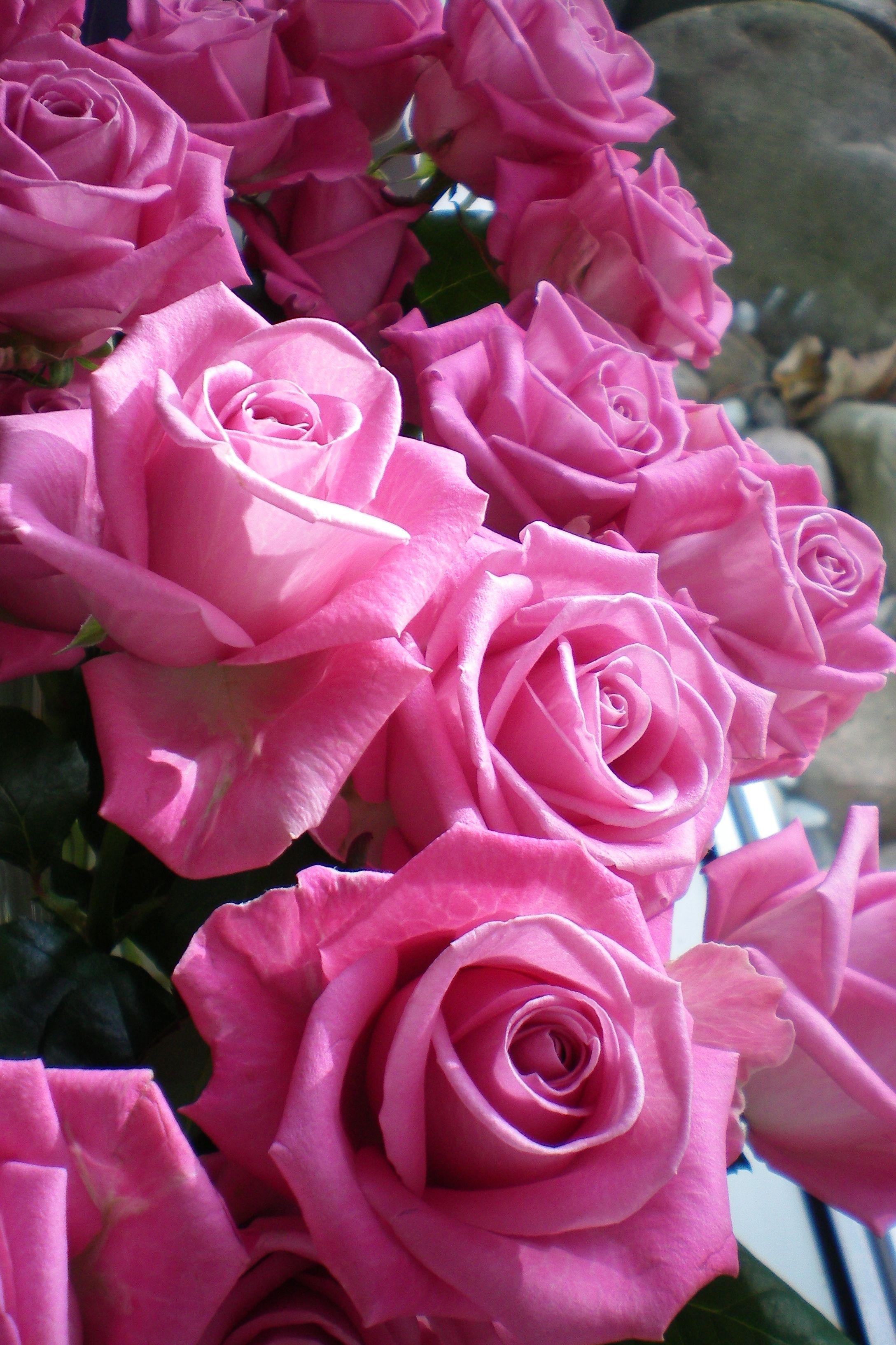 Diese Blume braucht keine Erklärung: sie ist und bleibt die unangefochtene Königin in Eleganz und Schönheit. Eine Rose ist eine Rose ist eine Rose.