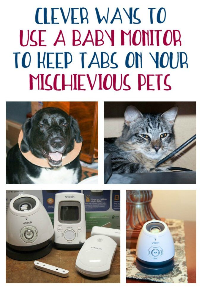 Clever Ways To Use A Baby Monitor To Keep Tabs On Your Pets Growwithvtech Breastfed Baby Baby Massage Before Baby