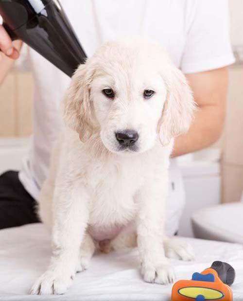 Top 10 Best Pet Dryers For Dogs Dog Grooming Tips Dog Grooming Dog Grooming Business