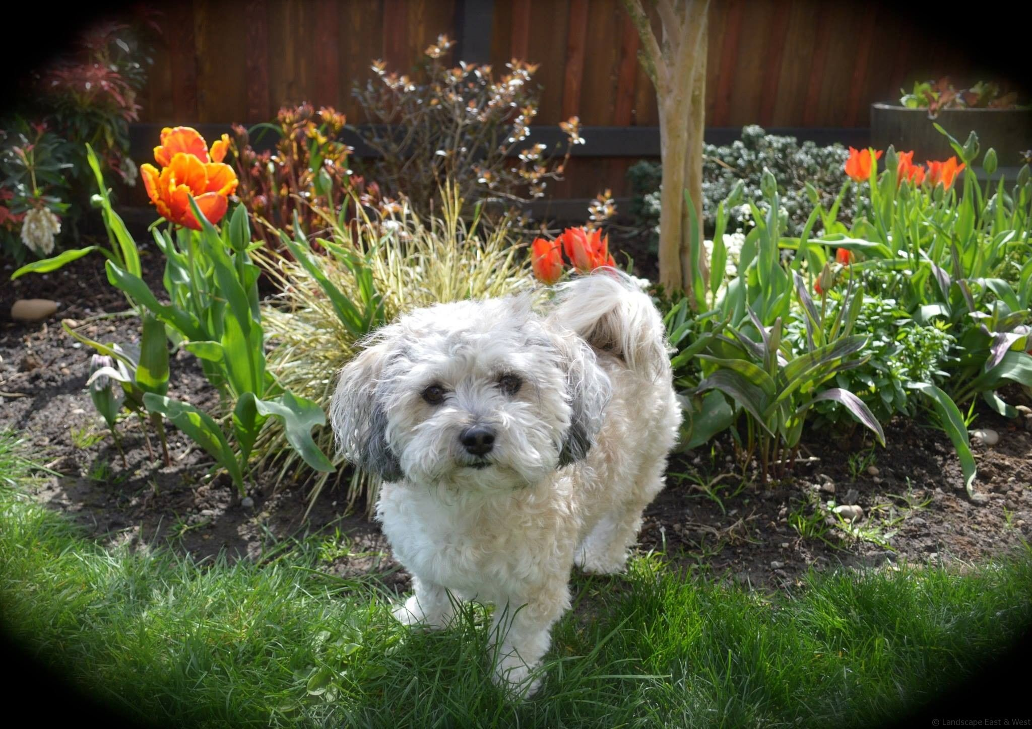 Twin Dog Friendly Landscaping (With images) | Dog friendly ...