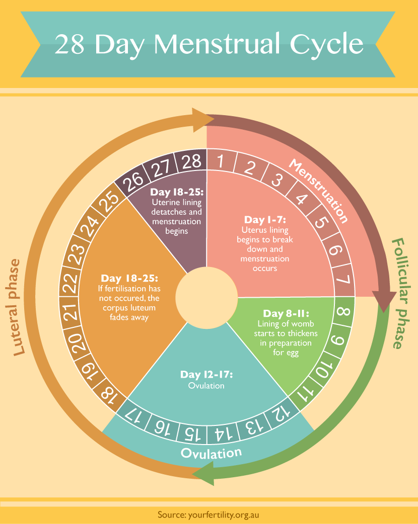 medium resolution of 28 day menstrual cycle all about periods