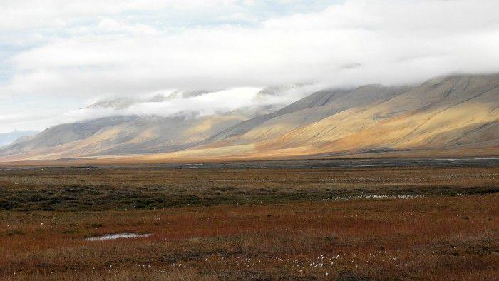 Resultado de imagen de la tundra