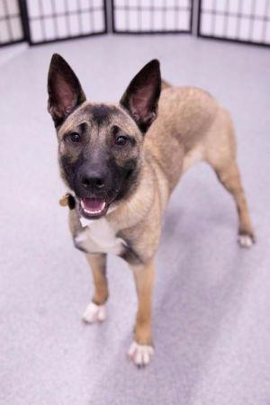 Dogs For Adoption Near Brainerd Mn Petfinder In 2020 Dog Adoption Pet Adoption Dogs