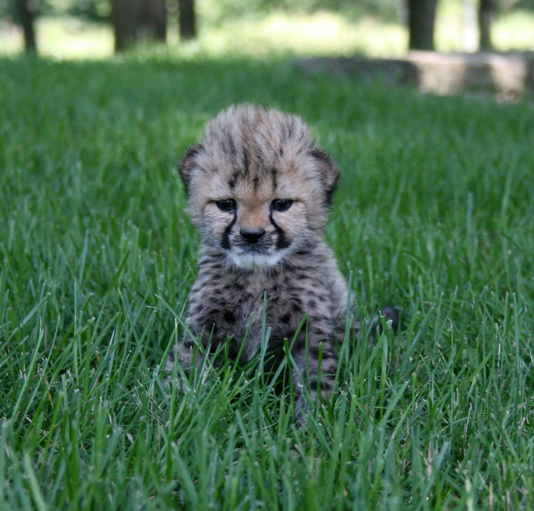 Canada's Original Safari Adventure Lion safari, African