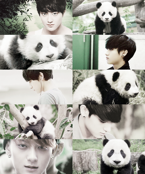Animal edit - Panda - EXO/Tao I'm having a hard time wondering where to put this one... But we all know that Tao Oppa is OBSESSED with Pandas! (Just like me!!)