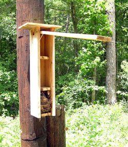 Flying Squirrels Biology nesting behavior