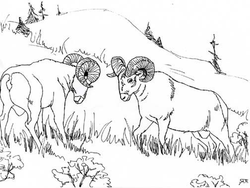Animal Colorings Bighorn Coloring