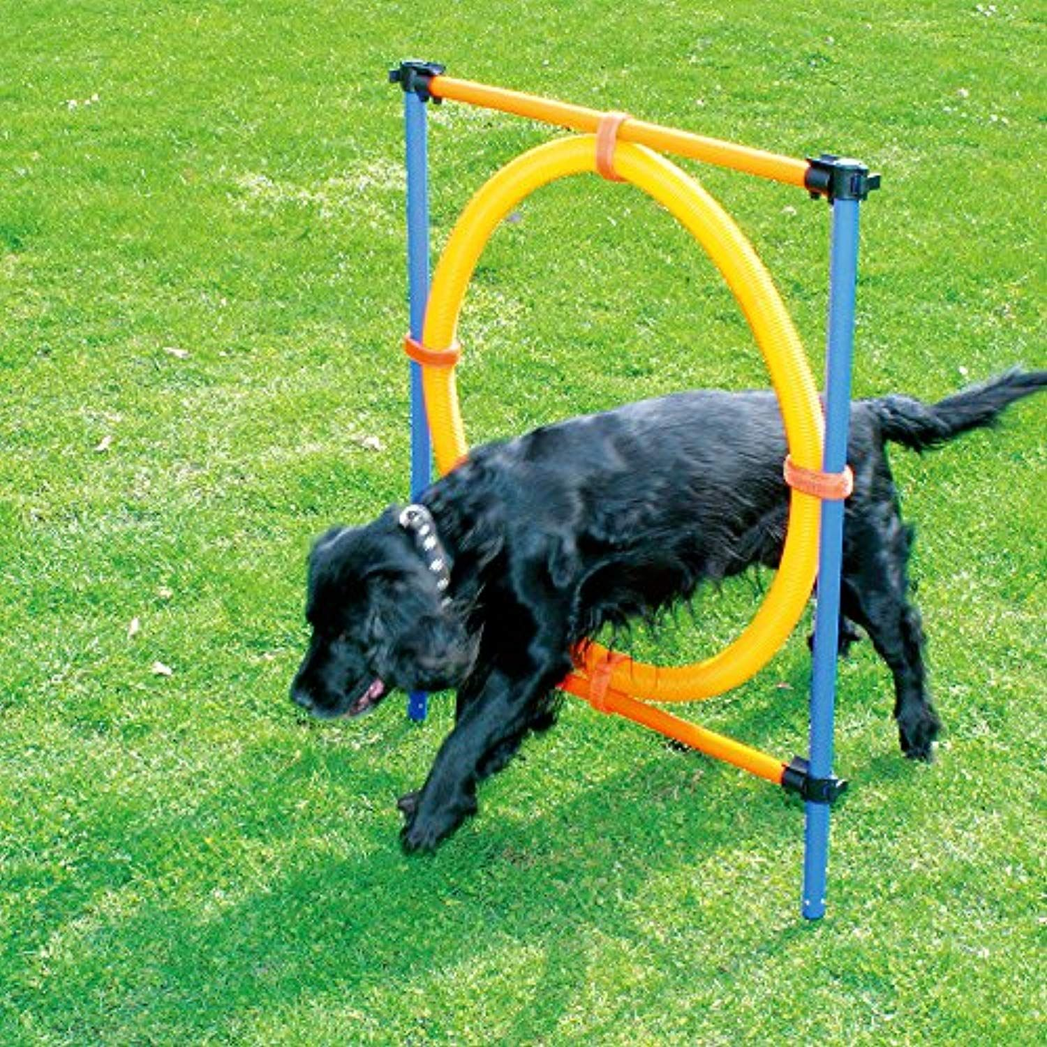 Agility Adjustable Hurdle Jump Pet Dogs Outdoor Games Agility Exercise Training Equipment