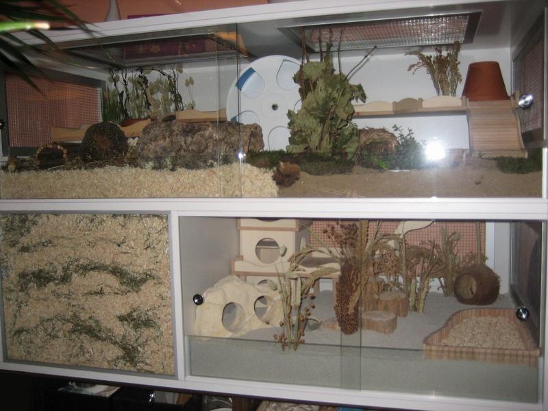 Cage En Bois Fait Maison  Rodent Toys And Cages