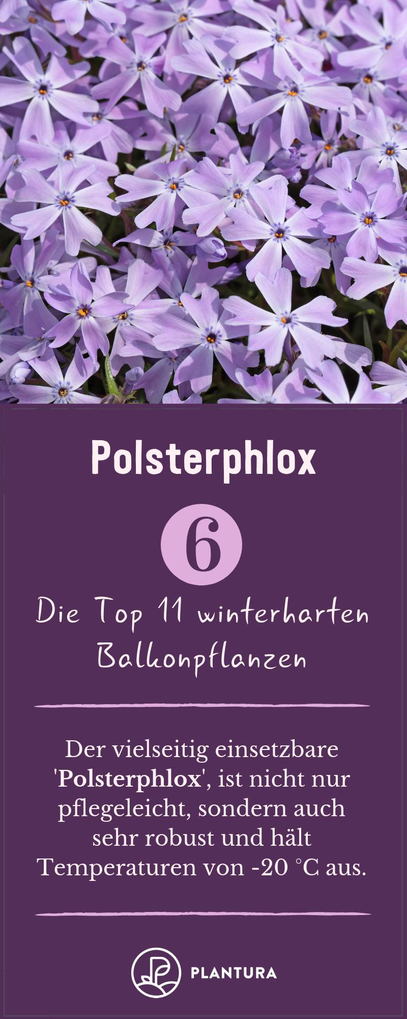 Winterharte Balkonpflanzen: Die Top 11 für Ihren Balkon - Plantura