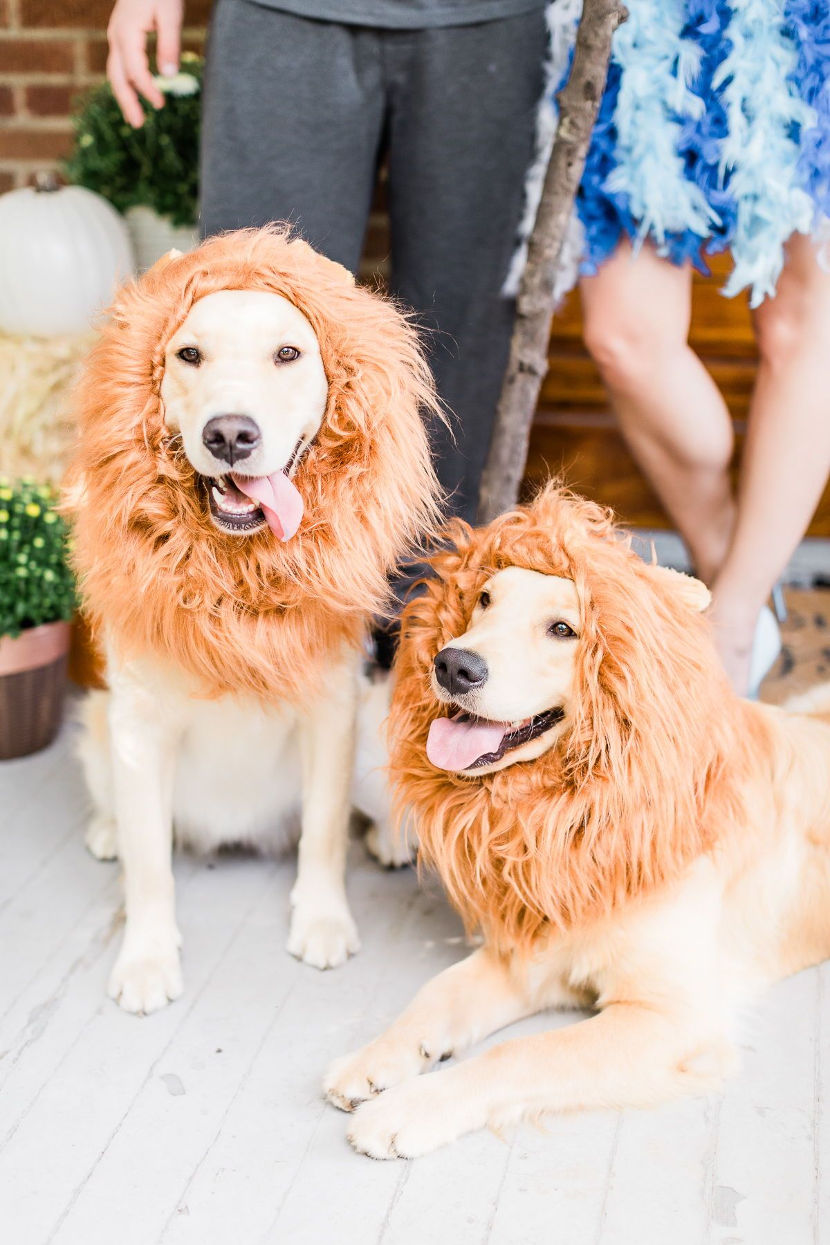 Diy Lion King Family Costume Tutorial Family Costumes Diy