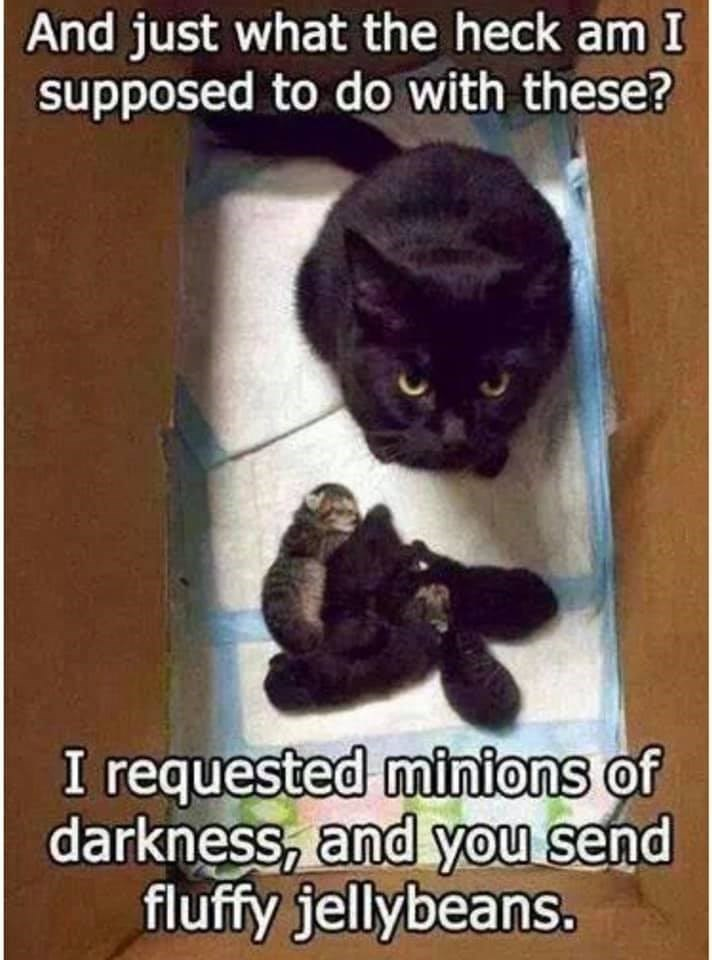 The Best Cat Meme Of The Decade 50 11 In 2020 Funny Cat Memes Funny Babies Mama Cat