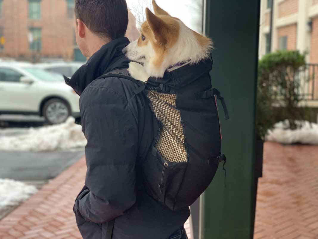 Dog Carrier Backpack Review Of K9 Sport Sack Pros Cons Dog