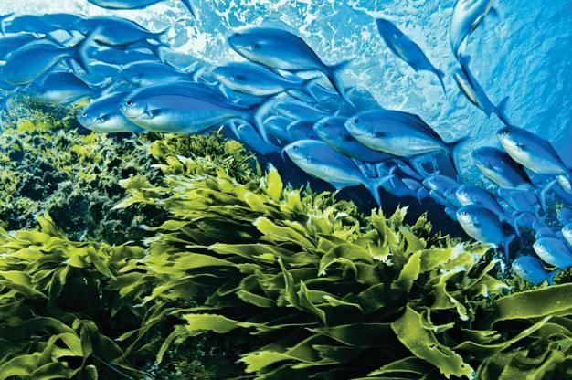 New Zealand underwater diversity