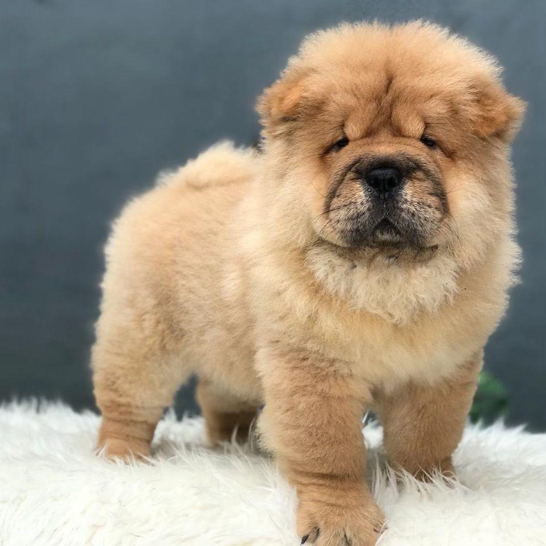 Pin On Dogsofinstagram