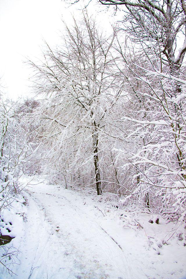 ⛄Traumhafte Winterlandschaft: So schön ist das Sauerland im Winter (Teil 1) -...