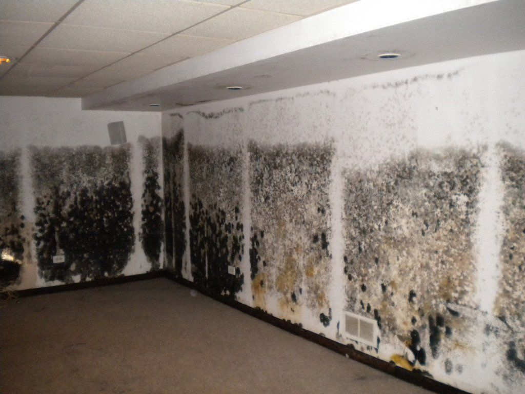 Water Damage, Fire Damage, Mold Removal And Remediation, Smoke Damage, Sewage  Cleanup