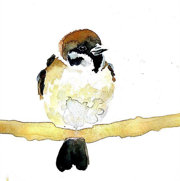 sparrow!! gorrión!!