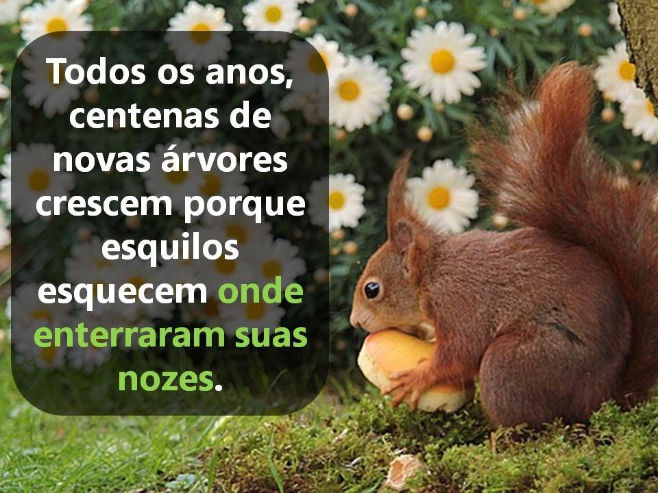 every year hundreds of trees are born because the squirrels forget where they buried nuts