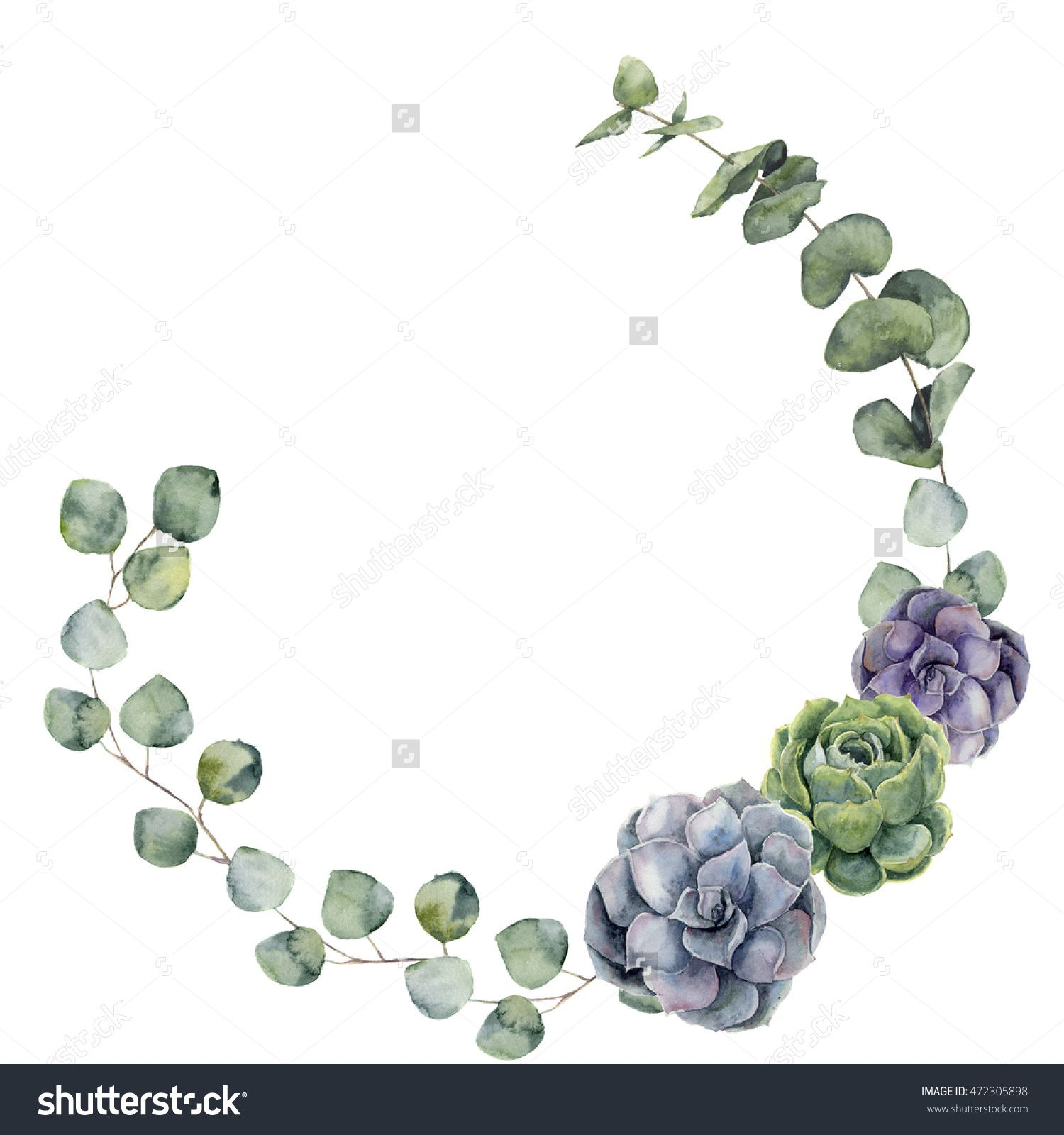 Watercolor floral border with baby, silver dollar eucalyptus and succulent. Hand painted floral wreath with branches, leaves of eucalyptus isolated on white background. For design or background