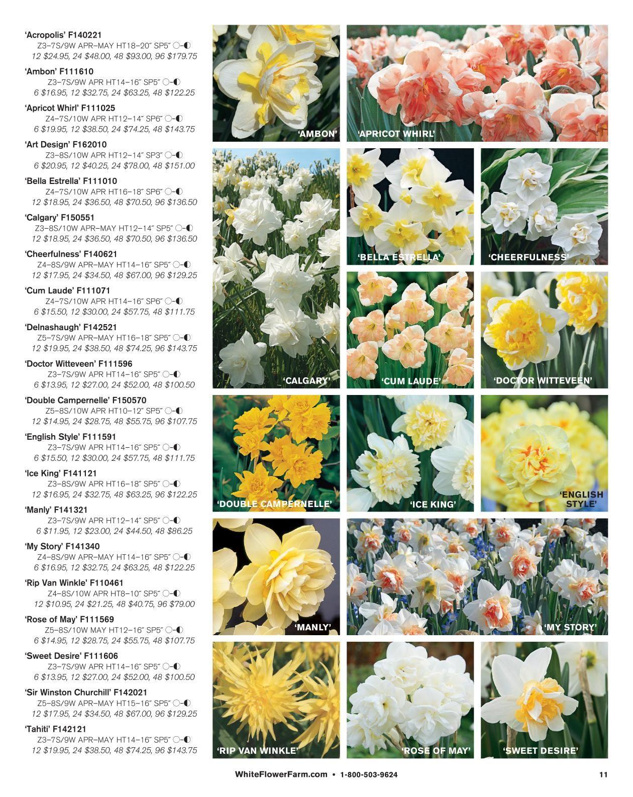 Contemporary White Flower Farm Catalogue Embellishment Images For
