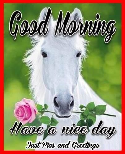 Good Morning Have A Nice Day Quote With A Horse Morning Good Morning