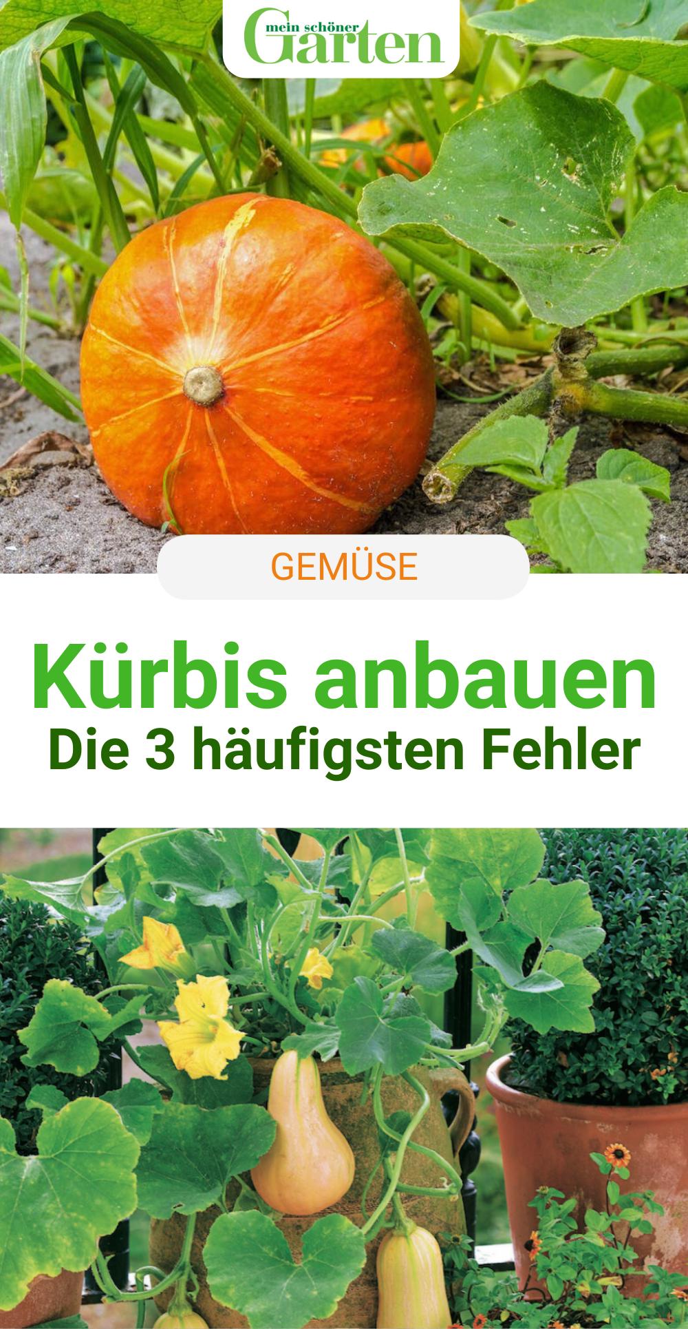 Kurbis Anbauen Die 3 Haufigsten Fehler In 2020 Garten Pflanzen Kurbis Pflanzen Garten