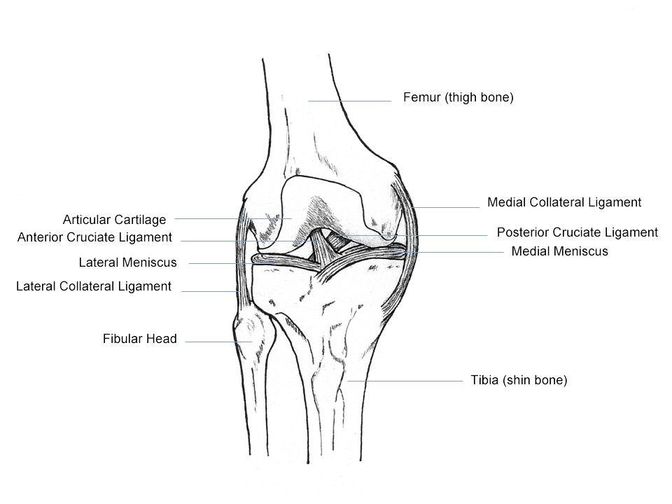 human knee anatomy bursae | Ideas for the House | Pinterest | Acl ...