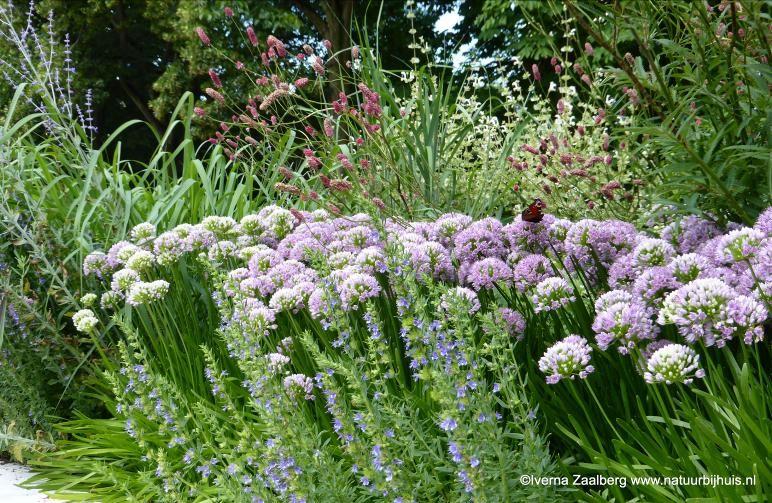 Vaste Planten Tuin : Onderhoud van vaste planten in de zomer wonen zo