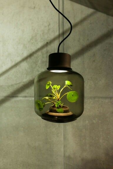 Terrarium Lamps Impractical But Neat Plant Lighting Lamp Lamp
