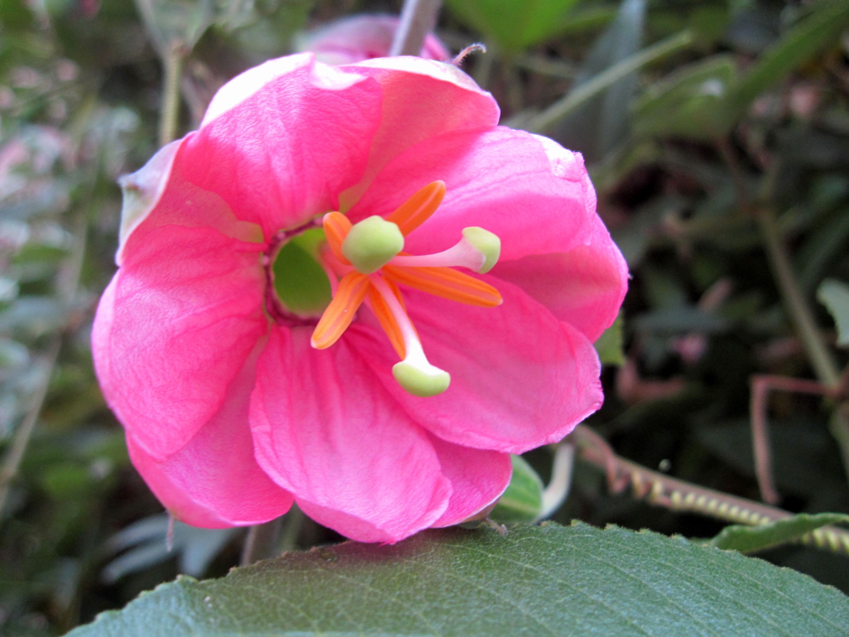 50 Most Beautiful Pink Flowers In The World Pinterest Pretty