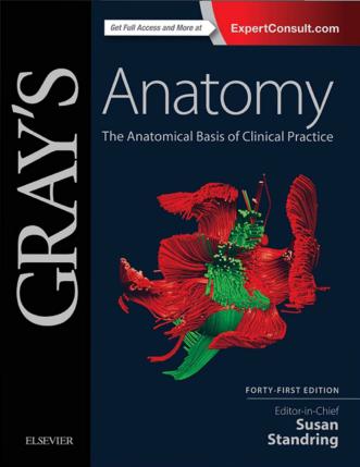 Downloadgraysanatomypdffree41steditionpreview Grey S