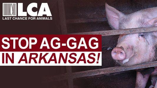 Petition  Stop Dangerous Arkansas Ag Gag Bill Hb   Change