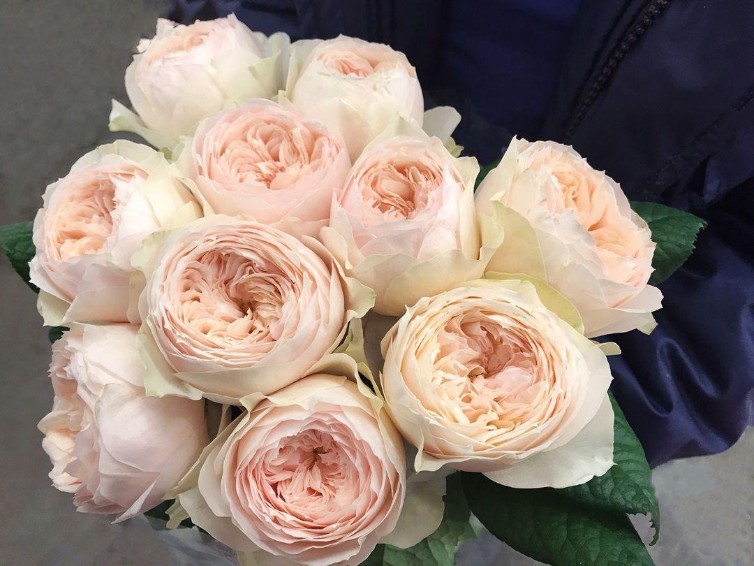 Цветы москва букета для невесты названия и фото, рождественский букет фото