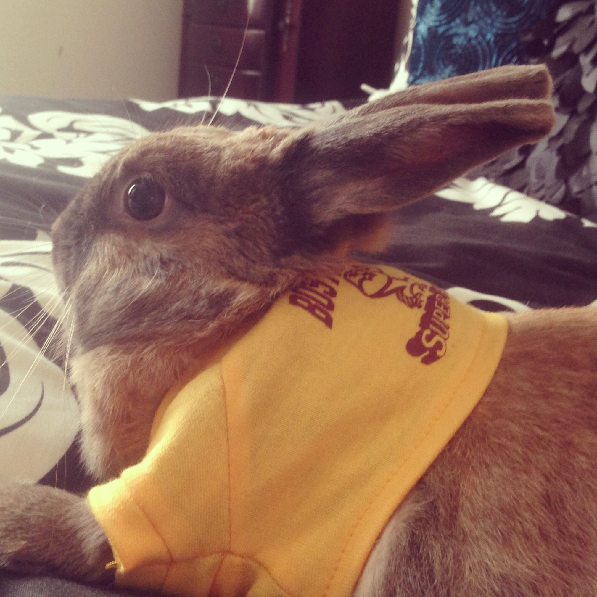 The Bunny Superfan Bailey Relaxing Furry Friend Boston College Superfan