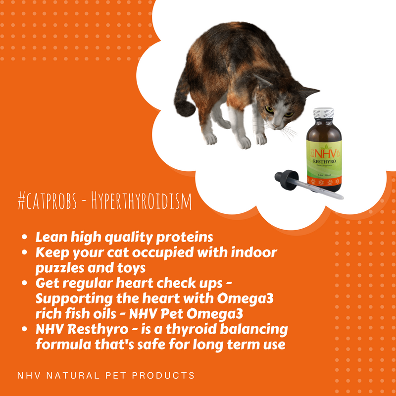 Resthyro For Cats Healthy Pets Cat Illnesses Natural Pet