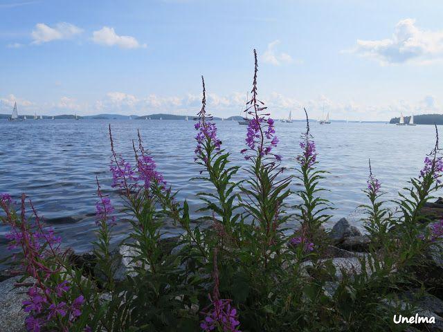 Mamman maailma: Järvi