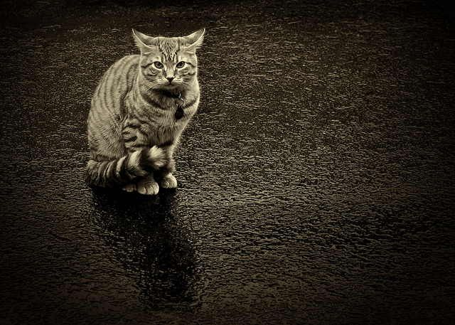 cats in the rain < cool things rain cat and cat cat cats in the rain <3