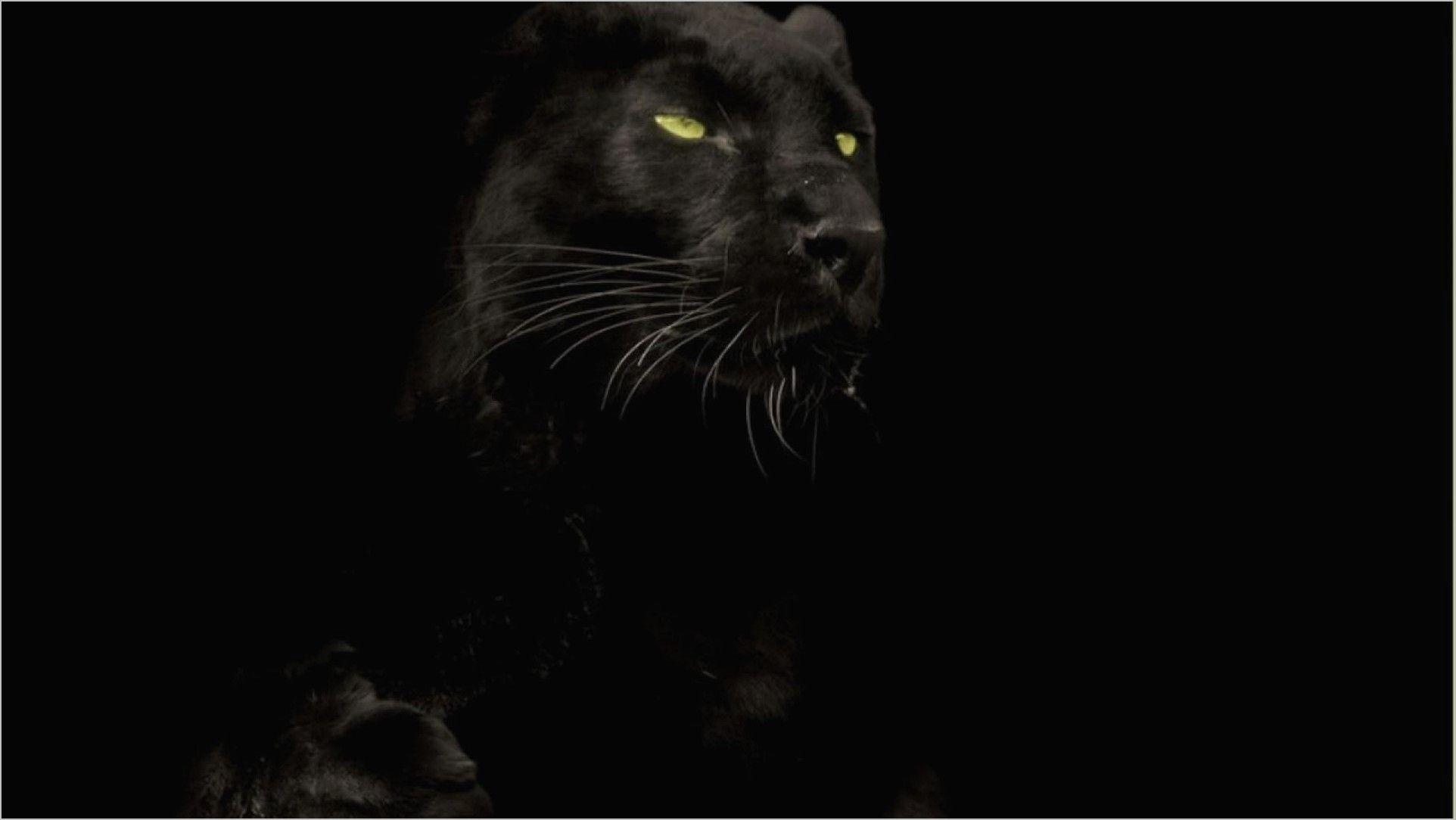Panther Animal 4k Wallpaper Black Panther Cat Animal Wallpaper Panther Cat