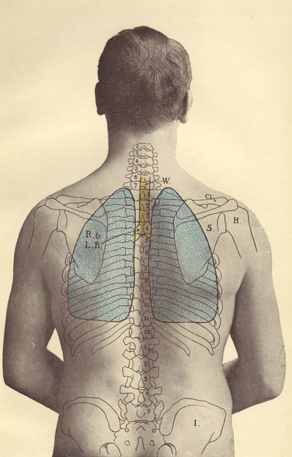 human body diagram tattoo 1907 position of the lungs in the human body by paperthesaurus  human body by paperthesaurus