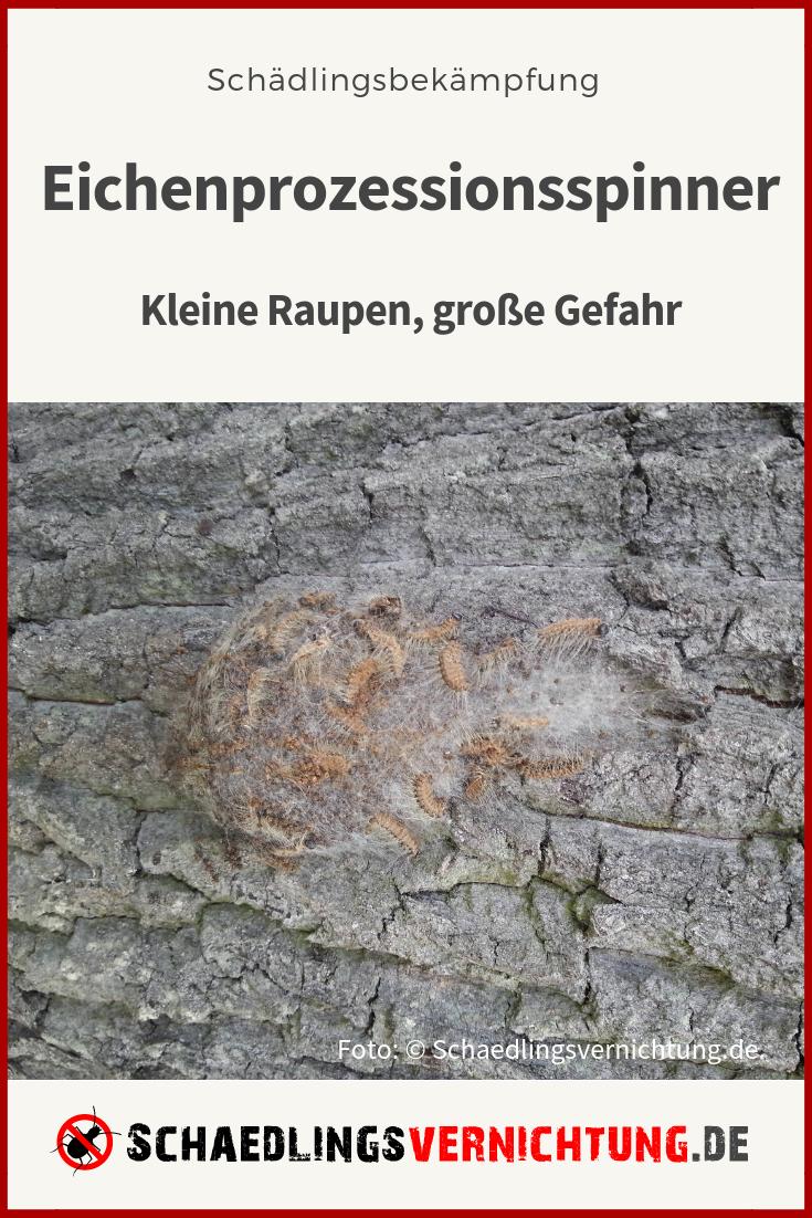 Eichenprozessionsspinner Eigenschaften Befall Und Bekampfung In 2020 Eichenprozessionsspinner Schadlinge Eichenbaum