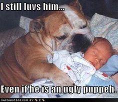 Pin On Bulldogs