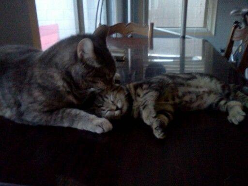 Baby and mama + there sooooo CUTE;);););)