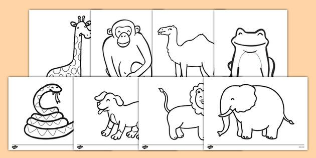 Dear Zoo Colouring Sheets Dear Zoo Kindergarten Coloring Pages Dear Zoo Activities