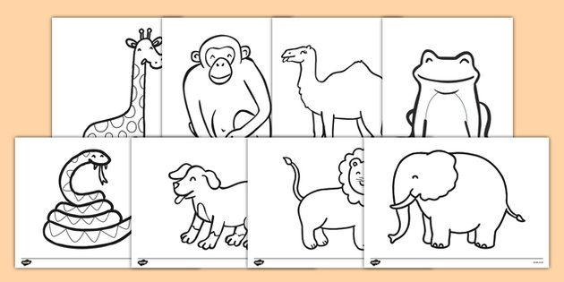 Dear Zoo Colouring Sheets Dear Zoo Kindergarten Coloring Pages Preschool Color Activities